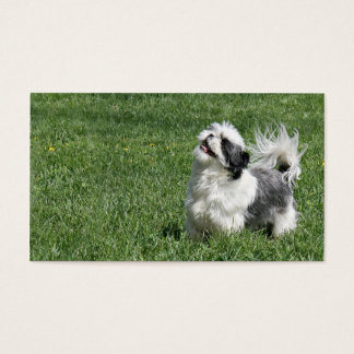 Playful Shih Tzu business card