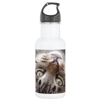 Playful Striped Feral Tabby Cat 532 Ml Water Bottle