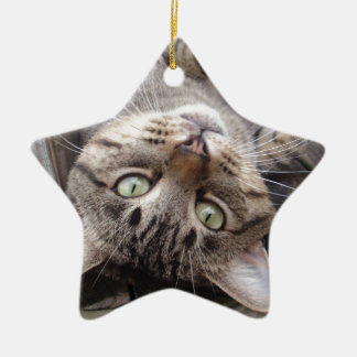 Playful Striped Feral Tabby Cat Ceramic Star Decoration