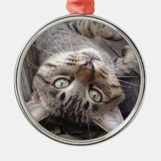 Playful Striped Feral Tabby Cat Silver-Colored Round Decoration