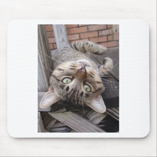 Playful Striped Feral Tabby Cat Mouse Pad