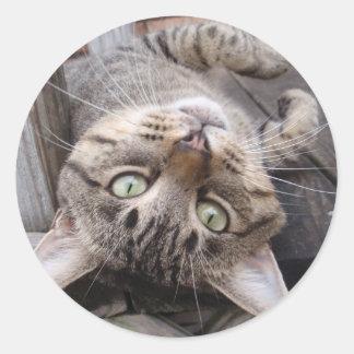 Playful Striped Feral Tabby Cat Round Sticker