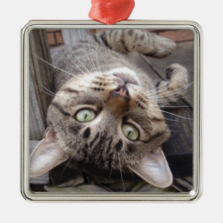 Playful Striped Feral Tabby Cat Silver-Colored Square Decoration