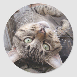 Playful Striped Feral Tabby Cat Round Sticker
