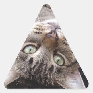 Playful Striped Feral Tabby Cat Triangle Sticker