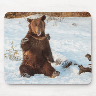 Playful Talking Bear Mouse Pad