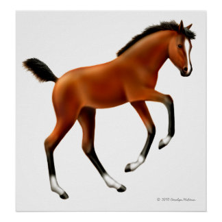 Playful Thoroughbred Foal Print