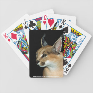 Playing cards - caracal