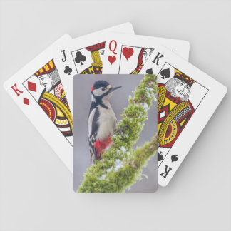 Playing cards Great Spotted Woodpecker snow perch