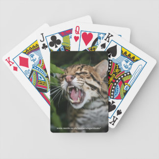 playing cards - ocelot