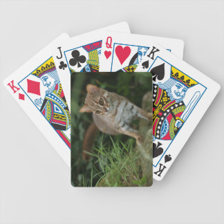 Playing cards - Rusty spotted cat