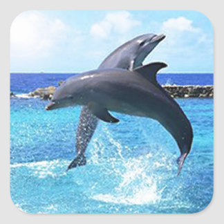 Playing Dolphins Square Sticker