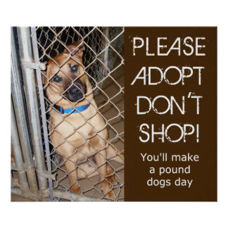 Please Adopt Don t Shop Adopt A Pound Dog Poster