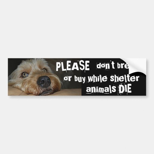 Please Dont Breed Or Buy While Shelter Animals Die Bumper Stickers