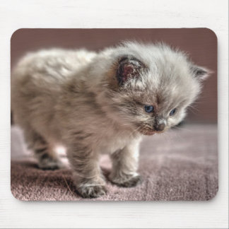 Please let me have the mouse? mouse mat