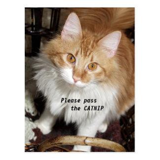 Please Pass the Catnip Cat Post Card