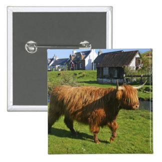 Plockton, Scotland. Hairy Coooo's (cows) doing 15 Cm Square Badge