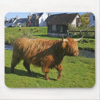 Plockton, Scotland. Hairy Coooo's (cows) doing Mouse Mat