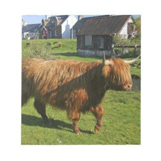 Plockton, Scotland. Hairy Coooo's (cows) doing Notepad