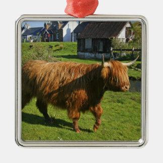 Plockton, Scotland. Hairy Coooo's (cows) doing Silver-Colored Square Decoration
