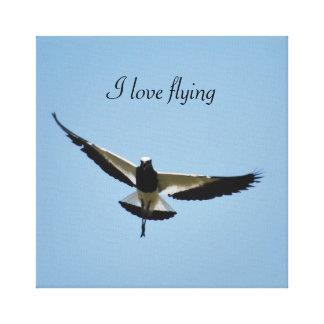 Plover bird in flight canvas prints