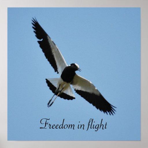 Plover bird in flight print