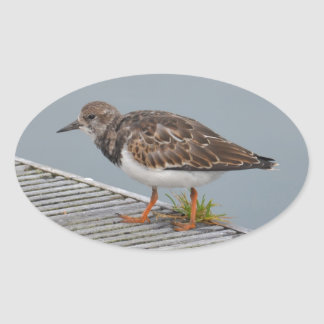 Plover In A Harbour Oval Sticker