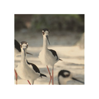 Plovers Wood Canvas