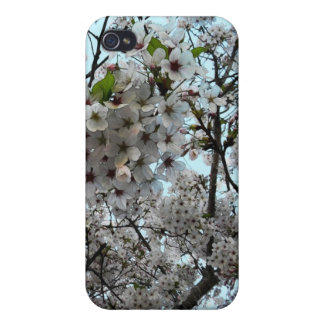 Plum Blossom Art iPhone 4/4S Covers