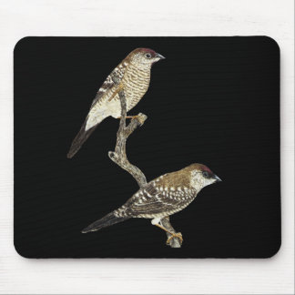 Plum-headed Finch Pair - Neochmia modesta Mouse Pad