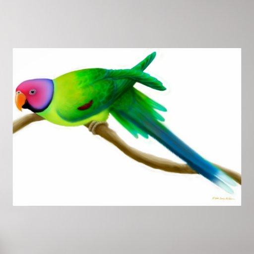 Plum Headed Parakeet Parrot Print