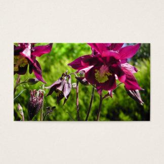 Plum purple flowers. Aquilegia. Business Card