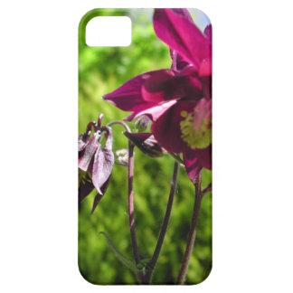Plum purple flowers. Aquilegia. iPhone 5 Cover