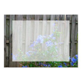 plumbago against wooden fence flower image personalized announcements