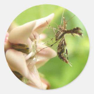 Plume Moth ~ sticker