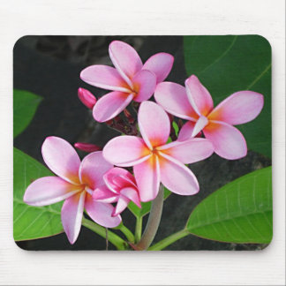 Plumeria at Virgin Gorda Bitter End Yacht Club Mouse Mat
