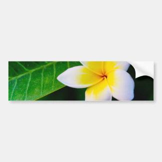 Plumeria Bumper Sticker
