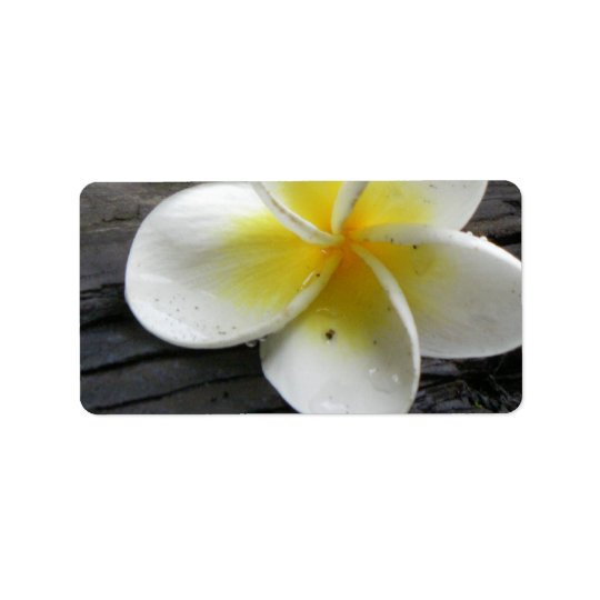 Plumeria Business Address/Shipping Labels