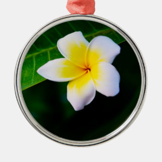 Plumeria Christmas Ornament