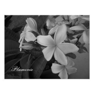 plumeria - Customized Poster