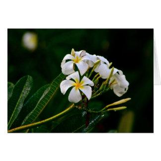 Plumeria Flower, Maui Greeting Card