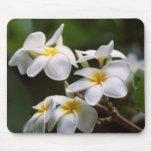 Plumeria Flower Mouse Pads