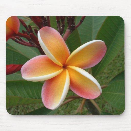 Plumeria Flower Oahu Hawaii Mouse Pad