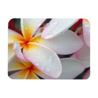 Plumeria Flowers Magnet Rectangular Photo Magnet