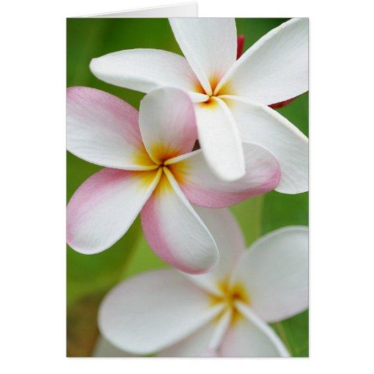 Plumeria Frangipani Hawaii Flower Customised Blank Card