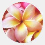 Plumeria Frangipani Hawaii Flower Customised Blank Round Sticker