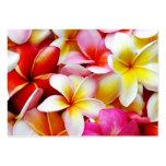 Plumeria Frangipani Hawaii Flower Customised Pack Of Chubby Business Cards