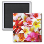Plumeria Frangipani Hawaii Flower Customised Square Magnet