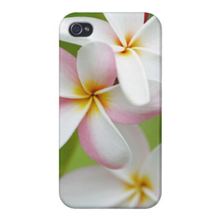 Plumeria Frangipani Hawaii Flower Customized Blank iPhone 4 Case