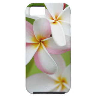 Plumeria Frangipani Hawaii Flower Customized Blank iPhone 5 Covers